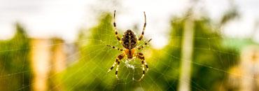 Spinnenbestrijding-2