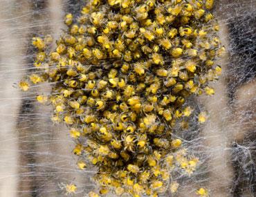 Spinnenbestrijding-3