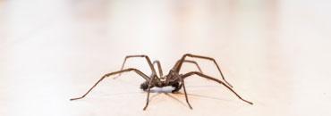 Spinnenbestrijding-4